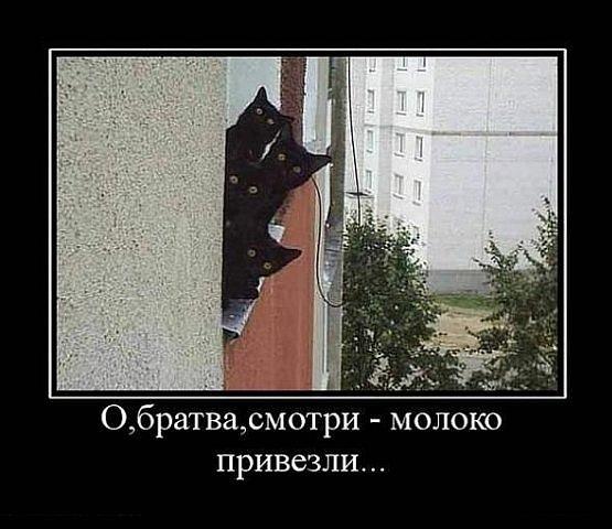 http://cs4440.vkontakte.ru/u2037648/124377535/x_bbdb059b.jpg