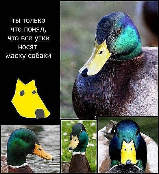 http://cs4441.vkontakte.ru/u40961980/94038505/x_2729443c.jpg