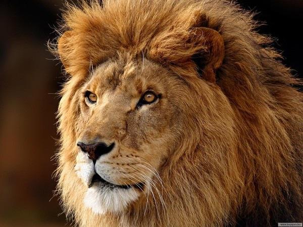 Львам может потребоваться убежище или укромное место, где можно без помех предаться переживаниям или заняться тайным делом.