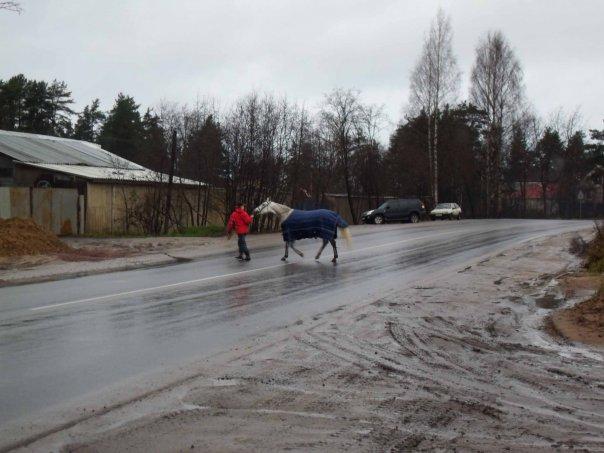 Давайте поможем зубрам в Токсово! › Блог › Фонтанка ру