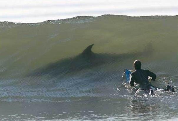 Ладно мы со Славой когда то лобанов смотрели в накатывающейся волне, но с акулами это воще экстрим.