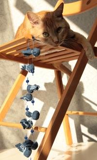 Кот Мандариновый