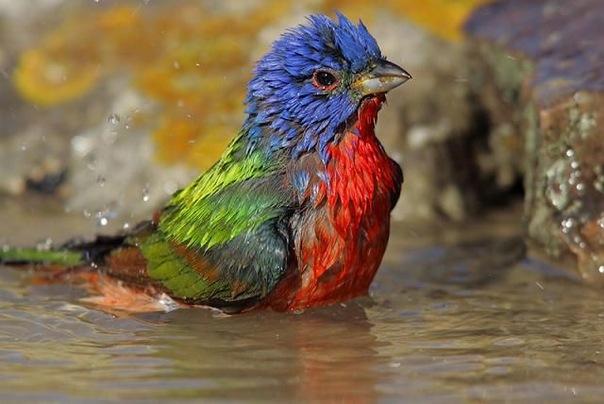 Приколы с птицами Фото-приколы Качественные прикольные фото с птицами.
