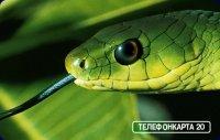...потходит змея, и спокойствие, и злоба, и поиск тепла...