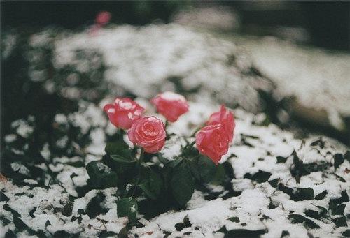 Девушка Роза Мечтает Быть Шлюхой