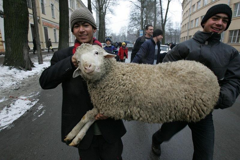 Баран - обиходное название самца домашней овцы.Пользуются спросом у кавказц