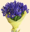 Ирисы - красивые синие цветы с жёлтой сердцевиной.