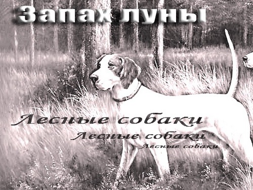 http://cs4484.vkontakte.ru/u125183371/-5/x_d01ae45c.jpg