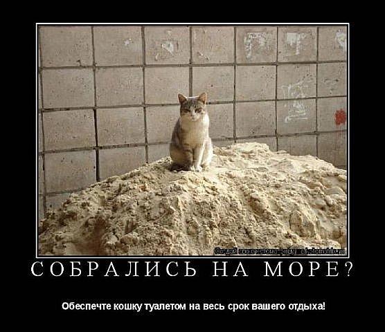 http://cs4528.vkontakte.ru/u44133303/111528553/x_b575db6d.jpg