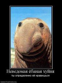 Дон Измай, Казань, id86863323