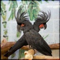 Виды попугаев - Попугаи