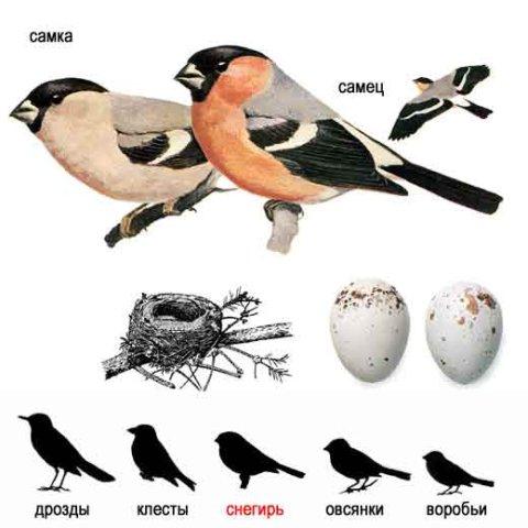 виды птиц фото