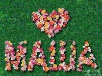значение имени аполлинария