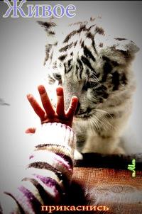 Правая Тибета