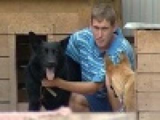 В одном из приютов Татарстана готовятся усыпить сотни животных - Первый канал