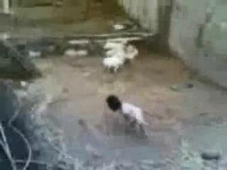 Ремейк фильма Крик; овцы в ужасе