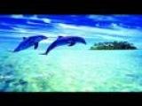 RyRalio DJs Sultry Blue (Radio edit)