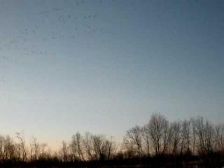 Goose Hunting Охота на гусей Архангельск Весна 2009
