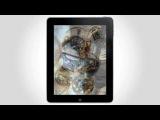 GQ Russia для iPad