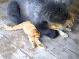 Медведь кота разорвал.