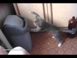Serious Boxing Cat! | Серьезный кот-боксер