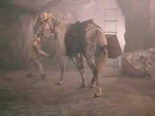 Кенгуру - песня из фильма