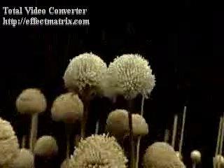 Плесень(1)-документальный, научно - исторический фильм