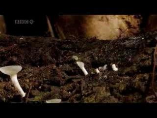 Гриб паразит Cordyceps Самый Страшный Секрет Природы