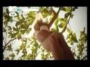 Вера Брежнева - Реальная Жизнь (клип 2011)