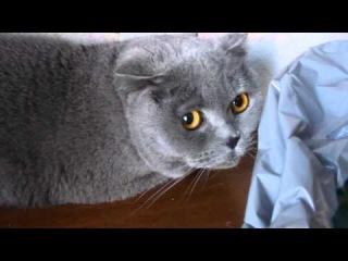Отгадайте какой котэ виновен?:))))