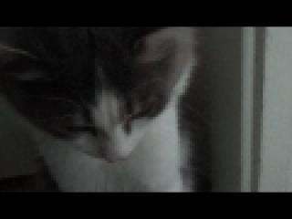 кот в сметане.MP4
