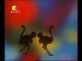 В мире животных — современная заставка (с 2006 г.) [HQ]
