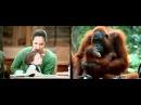 WWF показал, как похожи люди и звери