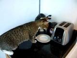 кот,повар,прикол,прыжок,ахаха,испуг,страх,паника,ржака,ржач,стеб,до слёз :)