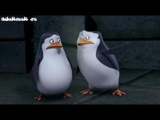 пингвины из мадагаскара 2 сезон 1 серия