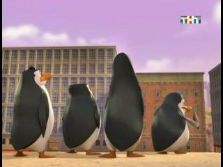 пингвины из мадагаскара 1 сезон 26 серия
