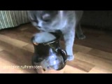 Кошка лижет киску в вазе