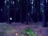 Khoiba 202 video