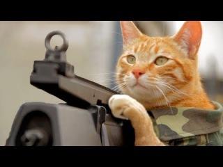 Котэ герой-пулемётчик