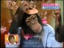 Japan Funny Show-Intelligent Monkey Kwaii!