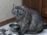 Дайте, наконец, коту чё-нить пожрать, гады!)))
