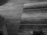 Thomas Newman - White Oleander