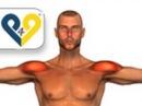 Ejercicios Hombros : Elevaciones laterales con mancuernas