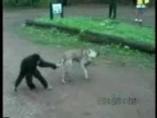 Обезьяна смеется над собакой