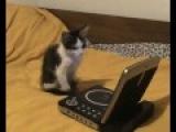 Кот смотрит мультик