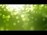 Kalpataru Tree - All Things Passing