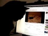 Очень смешная реакция кота