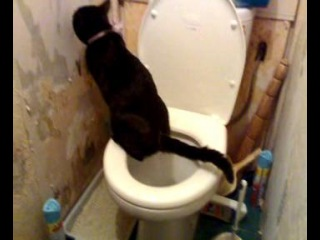 Коты тоже умеют ходить в унитаз