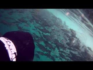 Подводная охота в Норвегии (Май 2010)