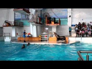 Дельфинарий города Набережные Челны  Морская львица Даша  Игра в волейбол